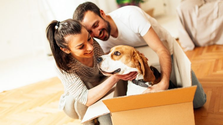 Available Facilities For A Move With Pets